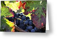 September Grapes - Square Greeting Card