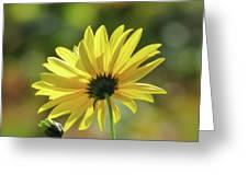 September Sunny Daisy Greeting Card