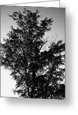 September Tree ... Greeting Card