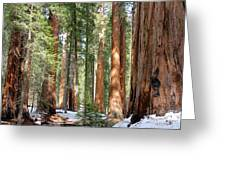 Sequoia Forest Greeting Card