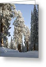 Sequoia National Park 4 Greeting Card
