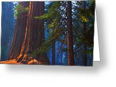 Sequoias On Blue Greeting Card