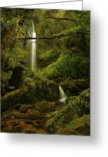 Serendipity At Cloudyforest Greeting Card