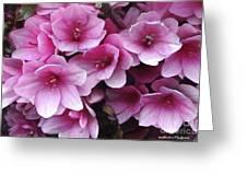 Serene Beauty Greeting Card