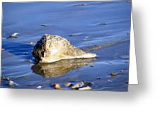 Serene Conch Shell At Isle Of Palms Greeting Card