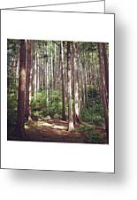 Serene Forest Greeting Card