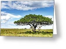 Serengeti Acacia Greeting Card