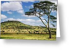 Serengeti Classic Greeting Card