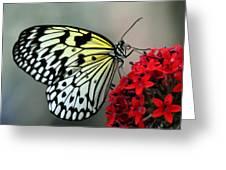 Serenity Greeting Card