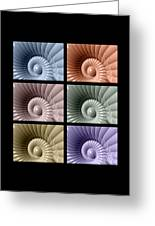 Series Of Sea Shells Greeting Card