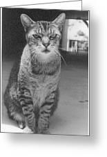 Serious Cat Model Greeting Card