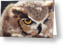 Serious Horned Owl Greeting Card