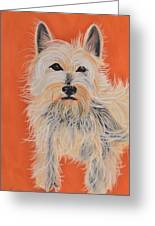 Serious Westie Greeting Card