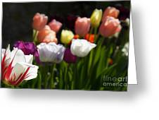 Seriously Colourful Greeting Card