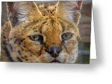Serval Cat Greeting Card