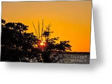 Setting Mangrove Sun Greeting Card