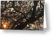 Setting Sun In Tree Greeting Card