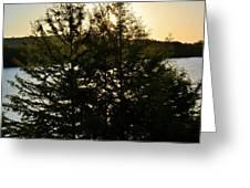 Setting Sun Through A Cypress Tree Greeting Card