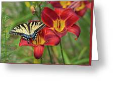 Settling In Greeting Card