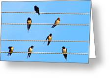 Seven Swallows Greeting Card