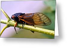 Seventeen Year Cicada Greeting Card