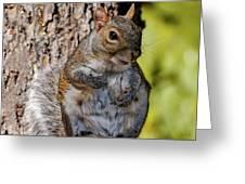 Sexy Squirrel Greeting Card