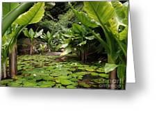 Seychelles Islands Pond Greeting Card