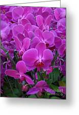 Sf Pink Flowers Greeting Card