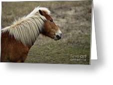 Shackleford Banks Greeting Card