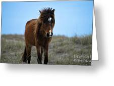 Shackleford Banks Pony Greeting Card