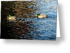Shade And Sunlight - Mallard Ducks Greeting Card