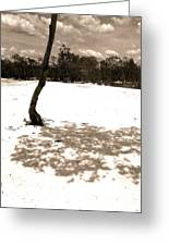 Shade Tree Greeting Card