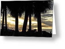 Shaded Palms Greeting Card