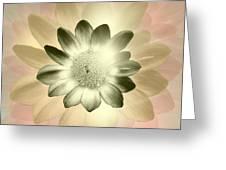 Shades Of A Daisy Greeting Card
