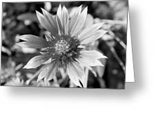 Shades Of Gray Flower By Earl's Photography Greeting Card