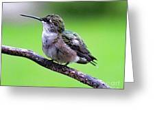 Shades Of Green - Ruby-throated Hummingbird Greeting Card