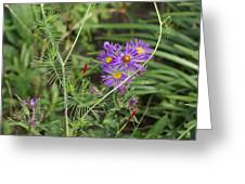 Shades Of Lavendar Greeting Card