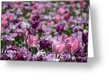 Days Of Wine And Tulips Greeting Card