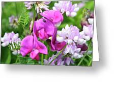 Shades Of Pink Greeting Card