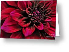 Shades Of Red - Dahlia Greeting Card by Kaye Menner