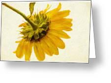 Shades Of Yellows Greeting Card