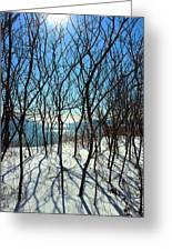 Shadow Branches Greeting Card