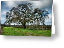 Shadow Of Great Oak Greeting Card