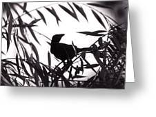 Shadow Of The Crow Greeting Card