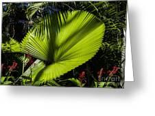 Shadow On A Ruffled Fan Palm Greeting Card