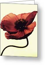 Shadow Poppy Greeting Card
