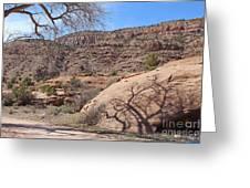 Shadow Tree Dominguez-escalante Canyon Colorado Greeting Card