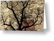 Shadow Wall Greeting Card by Marty Koch