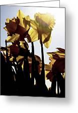Shadowed Daffodils Greeting Card