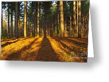 Shadows In Forrest  Greeting Card